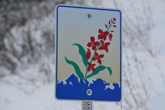 Alaska Scenic Byway Road Sign