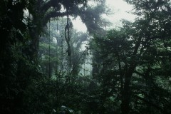 Cloud Forest Monteverde